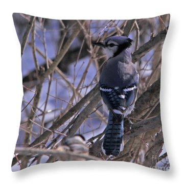 Bluejay In The Woods Throw Pillow