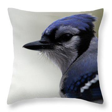 Bluejay Throw Pillow by Mike Martin