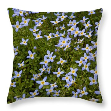 Bluets Throw Pillow