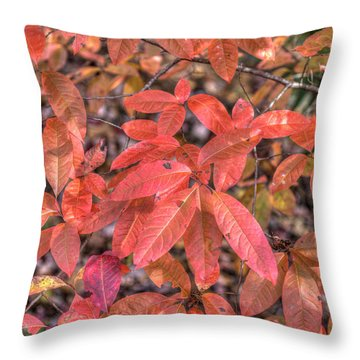Throw Pillow featuring the photograph Blush Of Color by Paul Schultz