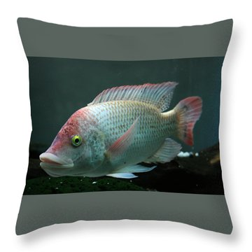 Blushing Tilapia Throw Pillow