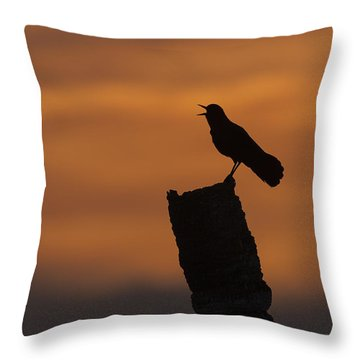 Boat-tailed Grackle At Sunset Throw Pillow