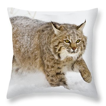Bobcat In Snow Throw Pillow