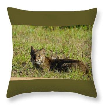 Bobcat In The Sun Throw Pillow