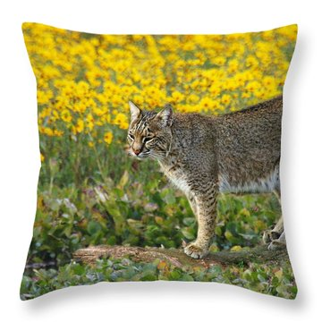 Bobcat In The Swamp Throw Pillow by Myrna Bradshaw