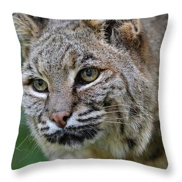 Bobcat In The Trees Throw Pillow
