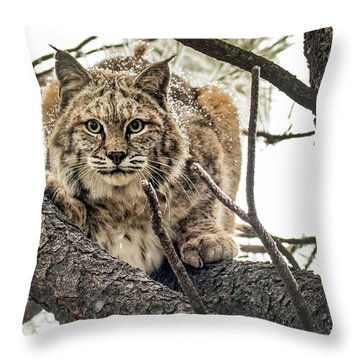 Bobcat In Winter Throw Pillow