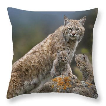 Bobcat Mother And Kittens North America Throw Pillow by Tim Fitzharris