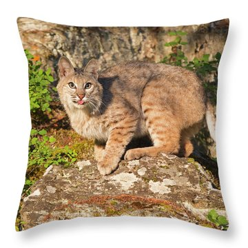 Bobcat On Rock With Tongue Out Throw Pillow