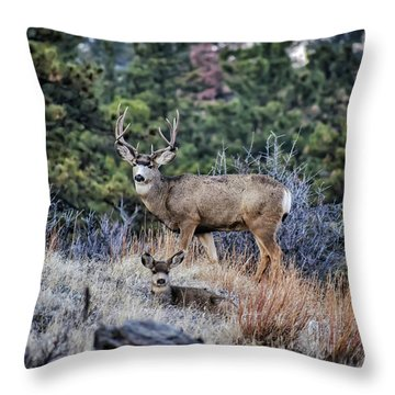 Bobcat Ridge Mule Deer Throw Pillow