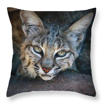 Bobcat Stare Throw Pillow by Elaine Malott