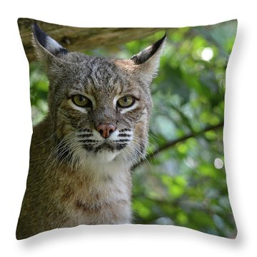Bobcat Staring Contest Throw Pillow