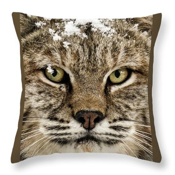 Bobcat Whiskers Throw Pillow
