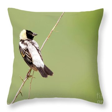Throw Pillow featuring the photograph Bobolink Looking At You by Ricky L Jones