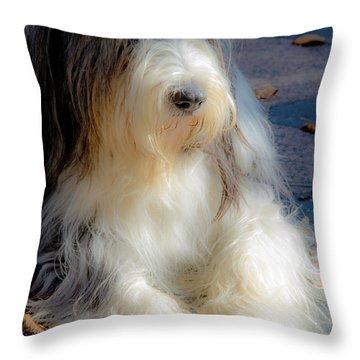 Bobtail's Nap Throw Pillow