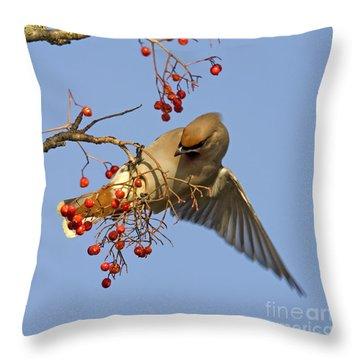 Bohemian Waxwing Throw Pillow