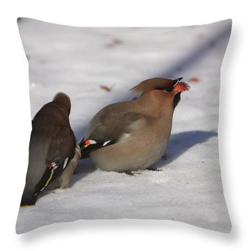 Bohemian Waxwings Eating Paradise Apples Throw Pillow