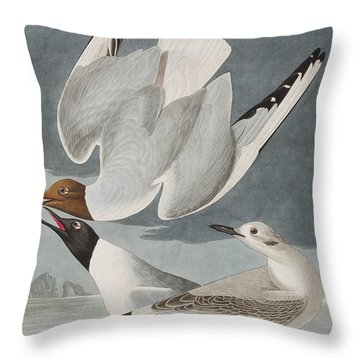 Bonapartian Gull Throw Pillow