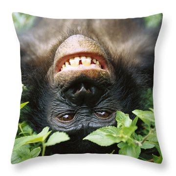 Bonobo Smiling Throw Pillow