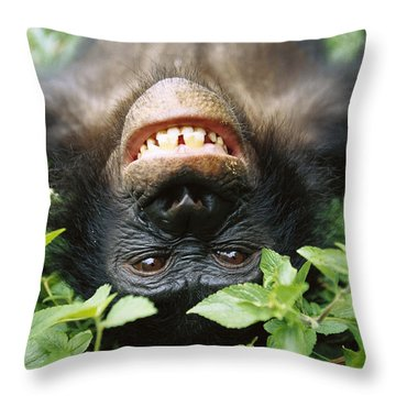 Throw Pillow featuring the photograph Bonobo Smiling by Cyril Ruoso