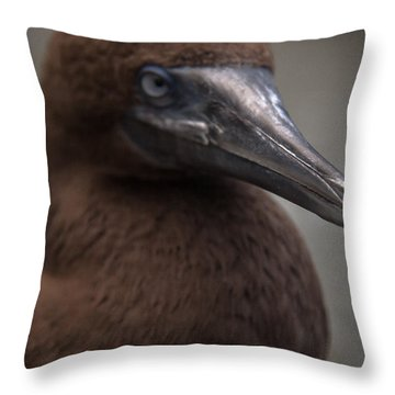 Booby Throw Pillow