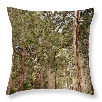 Throw Pillow featuring the photograph Boranup Drive Karri Trees by Ivy Ho