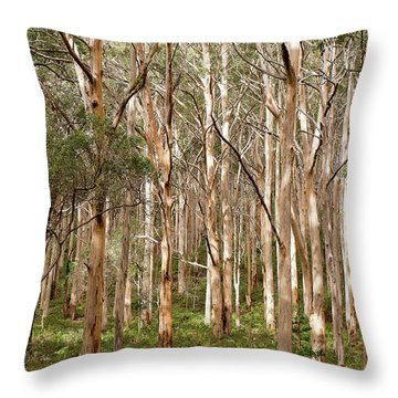 Throw Pillow featuring the photograph Boranup Forest Portrait by Ivy Ho