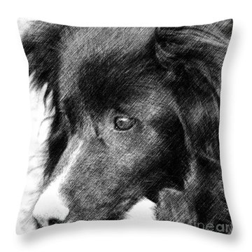 Border Collie In Pencil Throw Pillow