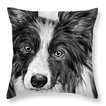 Border Collie Stare Throw Pillow