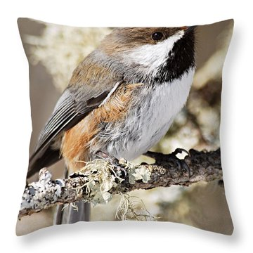 Boreal Chickadee Throw Pillow by Larry Ricker