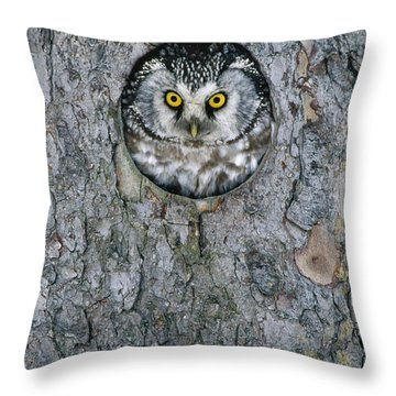 Boreal Owl Aegolius Funereus Peaking Throw Pillow by Konrad Wothe