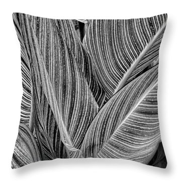 Boston Common Study 11 Throw Pillow