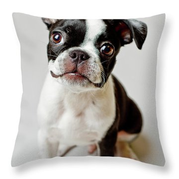 Puppy Throw Pillows