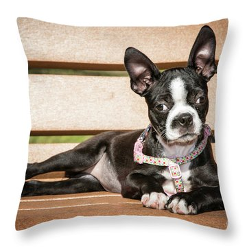 Boston Terrier Puppy Relaxing Throw Pillow by Stephanie Hayes