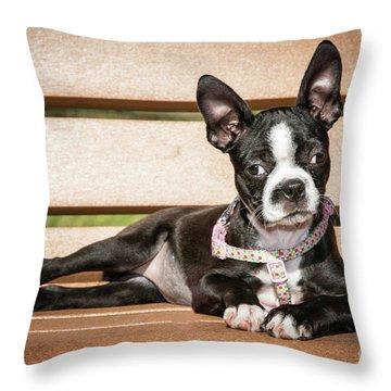 Boston Terrier Puppy Relaxing Throw Pillow