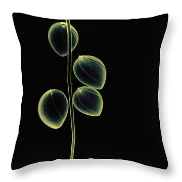 Botanical Study 2 Throw Pillow by Brian Drake - Printscapes