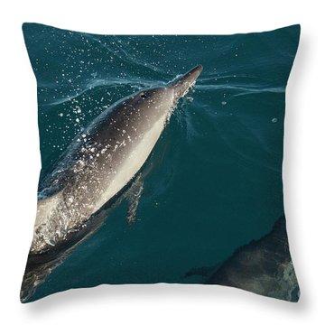 Bottle Nose Dolphin Throw Pillow