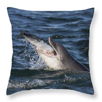 Bottlenose Dolphin Eating A Salmon - Scotland #5 Throw Pillow