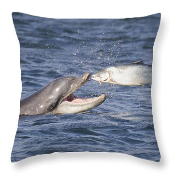 Bottlenose Dolphin Eating Salmon - Scotland  #36 Throw Pillow