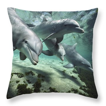 Throw Pillow featuring the photograph Four Bottlenose Dolphins Hawaii by Flip Nicklin