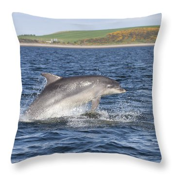 Bottlenose Dolphin - Scotland  #32 Throw Pillow