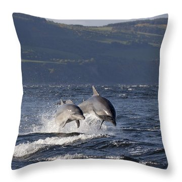 Bottlenose Dolphins Leaping - Scotland  #37 Throw Pillow