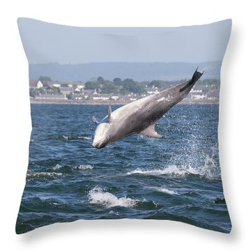 Throw Pillow featuring the photograph Bottlenose Dolphins - Moray Firth Scotland #45 by Karen Van Der Zijden