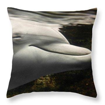 Dolphin Throw Pillows