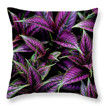 Bouquet Of Persian Shield Throw Pillow