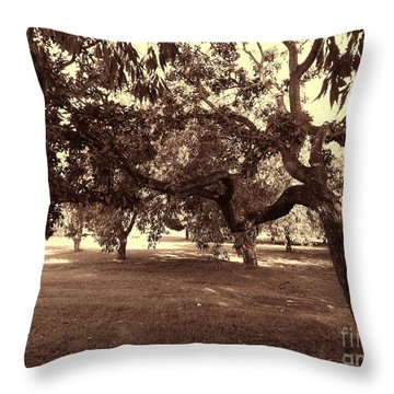 Throw Pillow featuring the photograph Bovary by Beto Machado