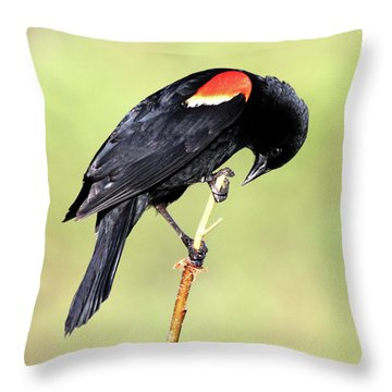Throw Pillow featuring the photograph Bowing by Shane Bechler