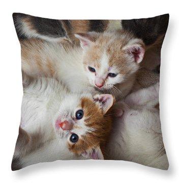 Box Full Of Kittens Throw Pillow