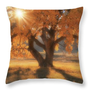 Boxelder's Autumn Tree Throw Pillow