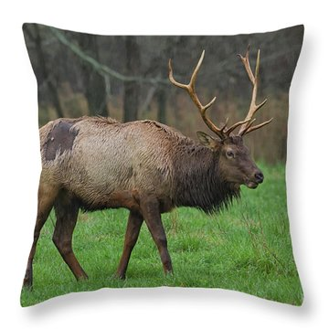 Boxley Elk Throw Pillow